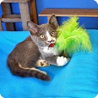 Adopt A Pet :: Titus - Glendale, AZ