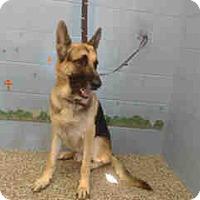 Adopt A Pet :: URGENT ON 11/8  San Bernardino - San Bernardino, CA