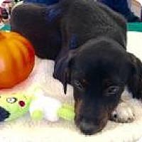 Adopt A Pet :: Kap - Warrenton, MO