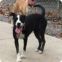 Adopt A Pet :: Junie - Rexford, NY