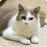 Adopt A Pet :: Mocha (& Junior) - Herndon, VA