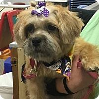 Adopt A Pet :: Daisy - Florence, KY