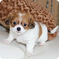 Adopt A Pet :: Millie- Adoption Pending - Temecula, CA