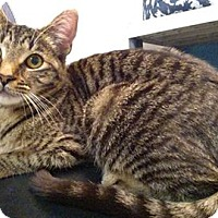 Adopt A Pet :: Cherry - Austintown, OH