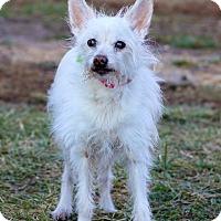 Adopt A Pet :: TD - Waldorf, MD