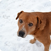 Adopt A Pet :: Brownie - Ridgway, CO