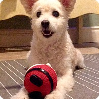 Adopt A Pet :: Skipper - Lucknow, ON