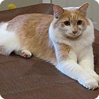 Adopt A Pet :: *Simon - Winder, GA