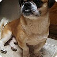 Adopt A Pet :: Panda - Hinckley, MN