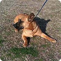Adopt A Pet :: Xanadu - Southampton, PA