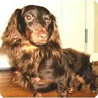 Adopt A Pet :: Leo - Mooy, AL