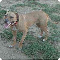 Adopt A Pet :: Sissy - Lodi, CA