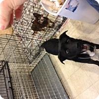 Adopt A Pet :: Duke - selden, NY