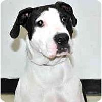 Adopt A Pet :: Maggie - Port Washington, NY