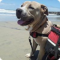 Adopt A Pet :: Butternut - San Diego, CA