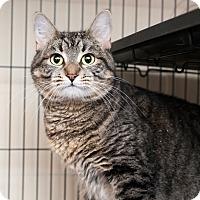 Adopt A Pet :: Breezy - Shelton, WA