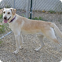Adopt A Pet :: Lincoln - Meridian, ID