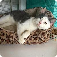 Adopt A Pet :: Noah - Hampton, VA