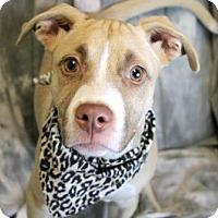 Adopt A Pet :: Bruno - Gulfport, MS