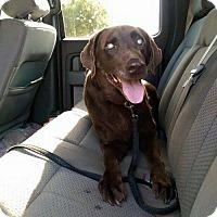Adopt A Pet :: Hooper (Owner Surrender) - Philadelphia, PA