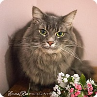 Adopt A Pet :: Kathy - Sterling Heights, MI