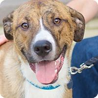 Adopt A Pet :: Brooks - Knoxville, TN