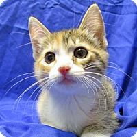 Adopt A Pet :: 16-c04-007 Dreamer - Fayetteville, TN