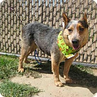Adopt A Pet :: *ROCKET - Norco, CA
