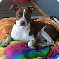 Adopt A Pet :: Zippie - Camas, WA