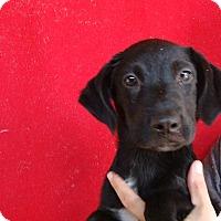 Adopt A Pet :: Sasha - Oviedo, FL