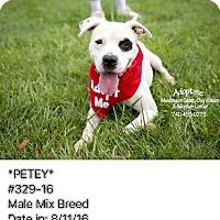 Adopt A Pet :: Petey - ADOPTED! - Zanesville, OH