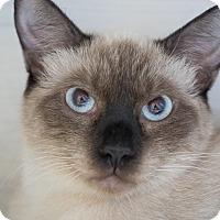Adopt A Pet :: Indigo - Los Angeles, CA