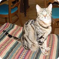 Adopt A Pet :: SQUEAK - EXOTIC MARKINGS! - Plano, TX