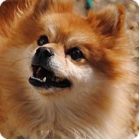 Adopt A Pet :: Bobbles - Philadelphia, PA