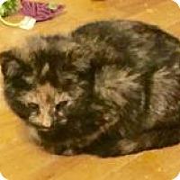 Adopt A Pet :: Autumn - Greensburg, PA