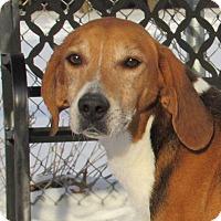 Adopt A Pet :: Duncan - Windsor, VA