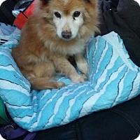 Adopt A Pet :: Dodge - Oakton, VA