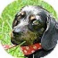Adopt A Pet :: Carly - Wakefield, RI