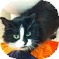 Adopt A Pet :: Penquin - Vancouver, BC