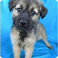Adopt A Pet :: Melody - Hagerstown, MD