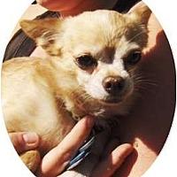 Adopt A Pet :: Aldous - Phoenix, AZ