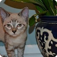Adopt A Pet :: Sushi - In Foster Care - Milwaukee, WI