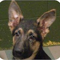 Adopt A Pet :: Adonis ADOPTION PENDING! - Antioch, IL