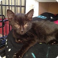 Adopt A Pet :: Kirk - Island Park, NY