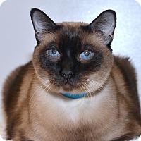 Adopt A Pet :: Blue - Medina, OH