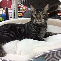 Adopt A Pet :: Tom - Antioch, CA