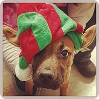 Adopt A Pet :: Eddie Vedder - West Allis, WI