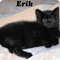 Adopt A Pet :: Erik - Bentonville, AR