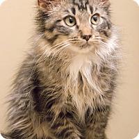 Adopt A Pet :: Bo Jingles - Chicago, IL