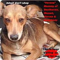 Adopt A Pet :: Verona - El Cajon, CA